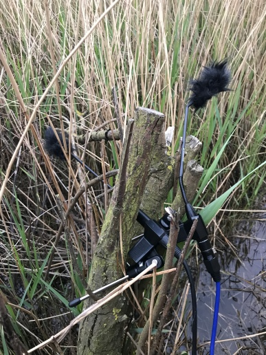 Microphones set up in the reed bed