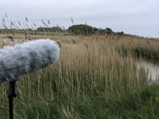 One of two microphones listening out over the marsh