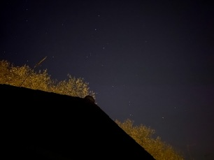 My roof, some trees and some faint stars