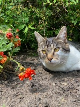 Cat posing by pretty flowers 1