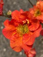 Pretty flower 1